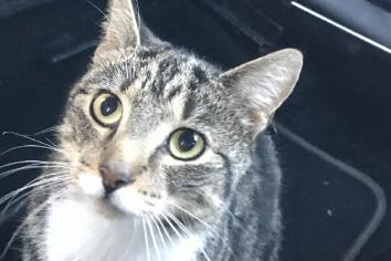 Tributes to Leo, the 'Tesco cat'