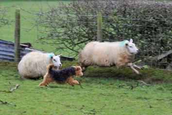 Keep dogs under control, warns farming union.