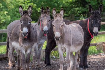 Enjoy a virtual Bank Holiday day out at the Donkey Sanctuary!