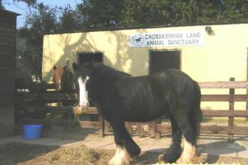Animal sanctuary seeks help to buy land for horses